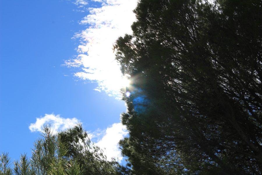 Cielo y árboles