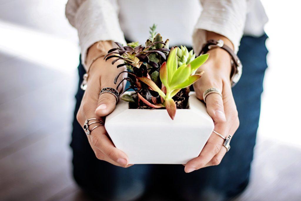 Mujer sosteniendo una planta