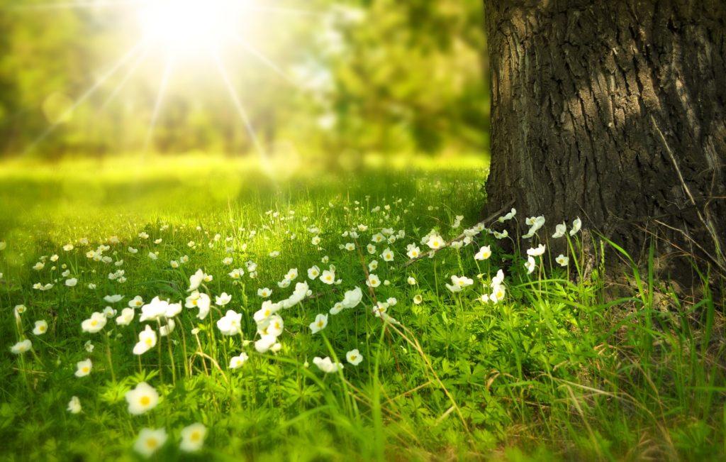 Imagen: detalle de la hierba y las flores junto a un árbol
