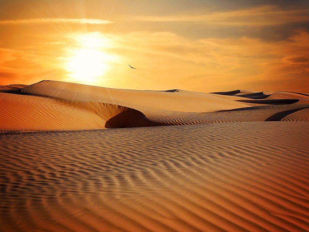 Dunas del desierto al atardecer