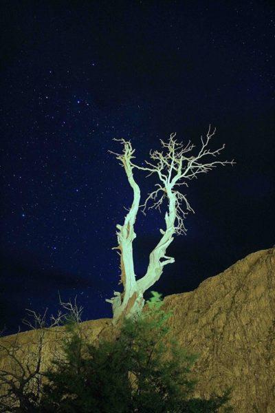 Árbol seco de noche